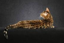 fauna y mascotas / by Lau Osorio