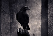 Corvus / by Peter Grondziowski