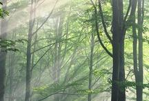Forest ᶫᵒᵛᵉ / by Wild Peony