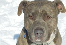 Big Dogs Need Love Too ~ ADOPT! / Big dogs needing rescue & lots of love / by Dee Broton