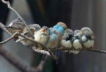 Birds...My Favorite Creature / by Pamela Kaiser