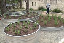 Garden Inspirations / by Sonja J. Hansen