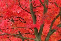 Fall / by Buggin