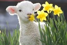Spring has Sprung!!!! / by Carrie McDowell Hodge