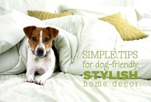 Dog TIPS / by MCAS Pets
