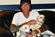 MCAS Celeb Pet LOVE / by MCAS Pets