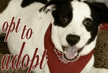 Opt To Adopt / by MCAS Pets