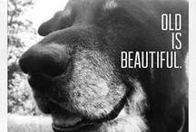 Senior Pet Love / by MCAS Pets