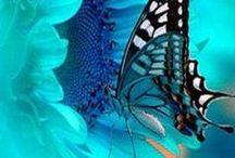 Color / by Bobbie Printz