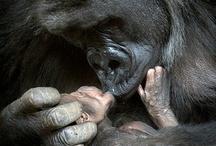animals / by Joanna Karadimitris