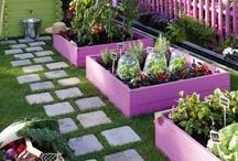 I can  garden 2. / by Damaris Ku Bauzo
