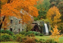 The Colors of Fall / by Joyce Harding Thompson