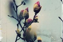 Flora / by Spring