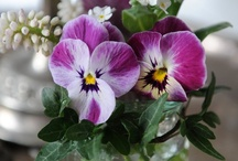 Flowers; love them  ; more ! / by Sheila Smith
