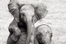 Elephants!! / by Red Parka