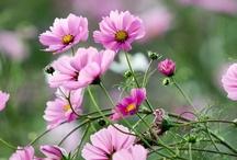 Garden Inspiration! / I LOVE flowers!  Still working on my green thumb!  :-)  / by Terri Guthrie