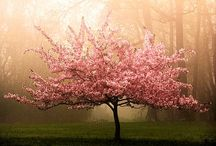 Trees (Blossoms) / by Isela Garcia