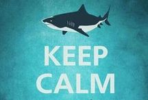 I Love Sharks!  / by Brooke Ramthun