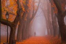 I love Autumn! / by Amy Kathleen