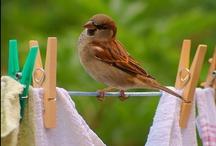 PUT A BIRD ON IT! / by Barbara Saia