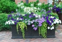 Feasible Gardening / by Laura Jones