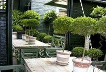 small courtyard gardens / by Bev Prentice