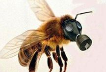 SAVE the BEES / Bees are life to humans and we're killing them.  / by Gretchen Dennison