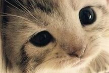 Kitten Galore  / by Madison Templeton