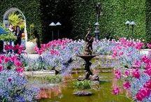Great Gardens / by Stacy Stewart