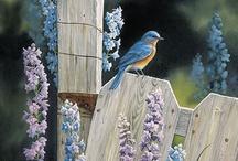 I'm so Blue / by Peg Schoening