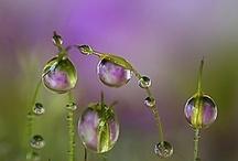 Purple  / by Peg Schoening