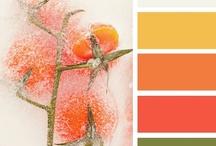 Color Palettes / by Peg Schoening