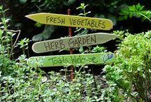 Gardening / by Jenette O'Rourke