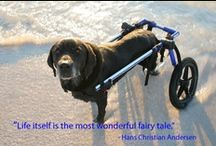 ANIMALS: Dog Special Needs & Elderly Products / by Leigh Sidell