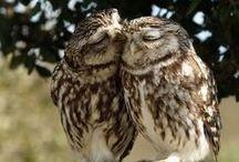 Kiss Kiss / by Hannah Kreoger