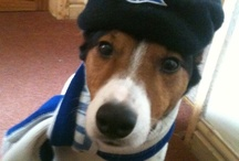 Bluenose pets / by Birmingham City Football Club