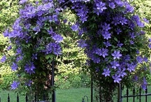 Garden and Outdoors / by Ladonna Branson