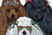 Poodles / I love my poodles! / by Joan Altman