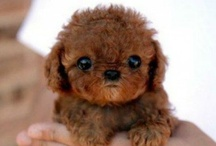 It's so fluffy I could die! / by Anna Cunningham