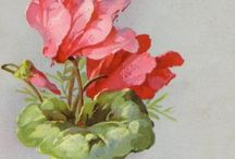 Floral Art of Catherine Kline / by Jean Callaghan