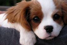 Puppy Love / by Stephanie Farrell