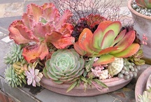 Container Gardens / by Barbara Camp