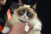 Grumpy Cat / by Mona Fromm