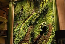 Living Green / by Clean Spirited