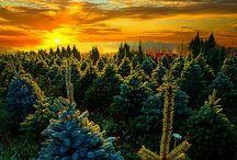 Beautiful Nature & It's Creations / by Sulieti Tautu'u Fonua-Angilau