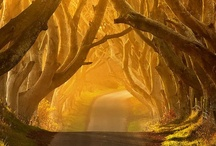 Trees / by Rhonda Jenkins