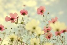 Flower power / by Vibeke Stiansen