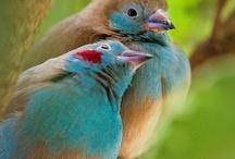 Birds Works / by Cynthia Fardan