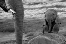 Animals ~ Elephants / by Wine Country Woman