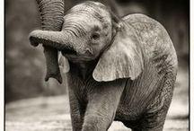 Animal Cuteness / Way. Too. Cute. / by Seth Ward Pyatt